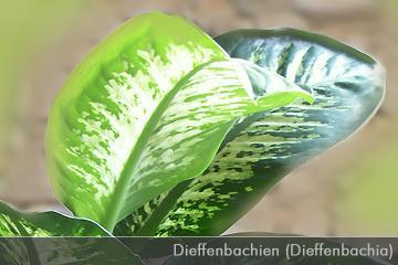 Westie board druckvorschau giftige zimmerpflanzen seite 1 - Giftige zimmerpflanzen ...